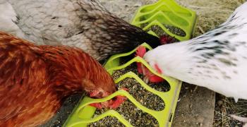 Renforcement des mesures pour lutter contre l'influenza aviaire
